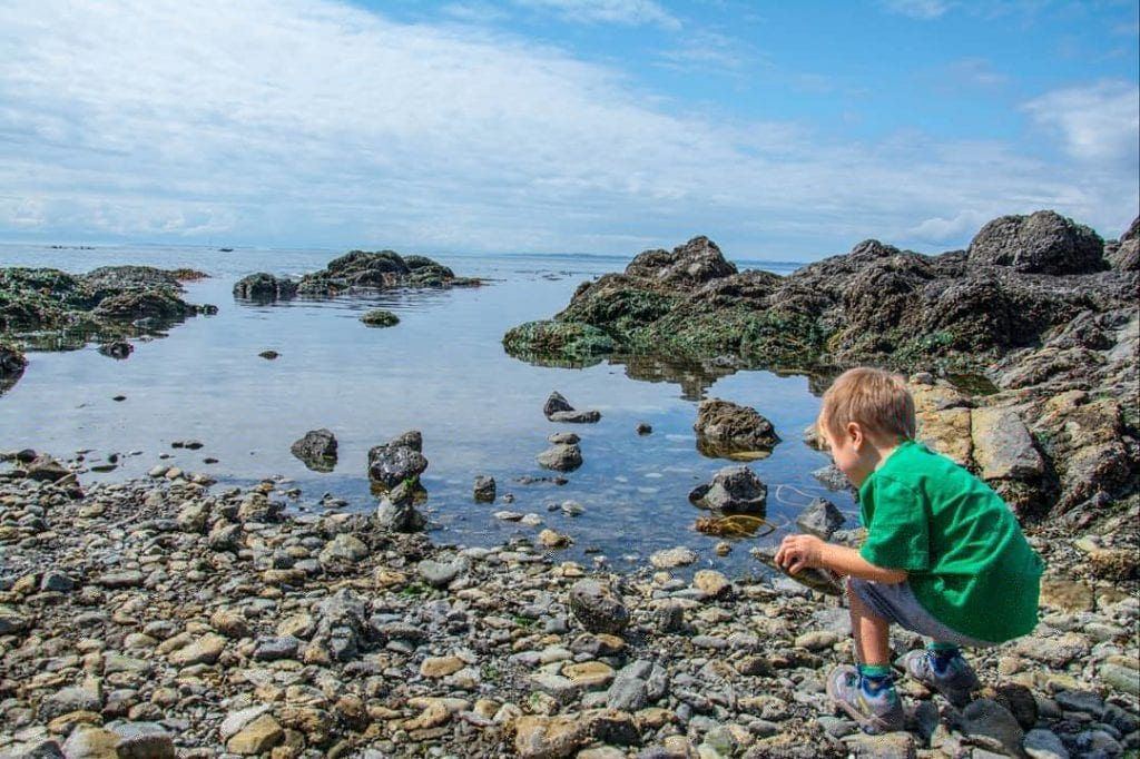Toddlers checking out tide pools in LIme kiln State Park