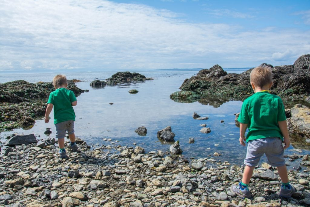 Toddlers exploring the tide pools on San Juan Island